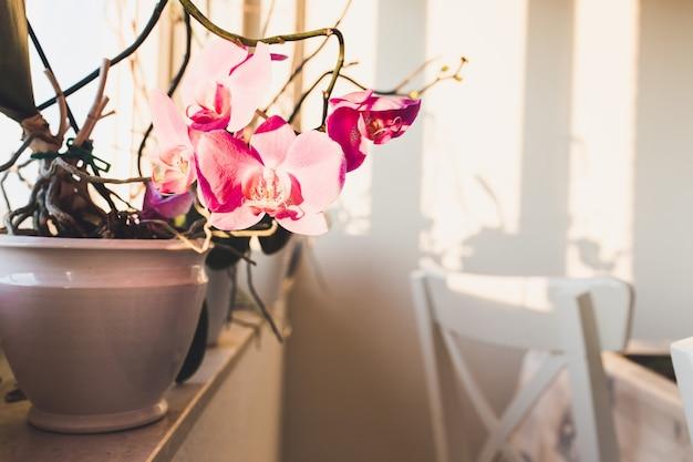 Orquídeas rosa em um vaso no parapeito de uma janela com cadeiras brancas Foto gratuita