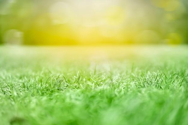 Orvalho da manhã na textura de grama verde tratada de um campo Foto Premium
