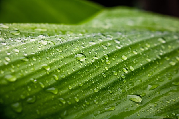 Orvalho e folhas verdes fundo Foto Premium