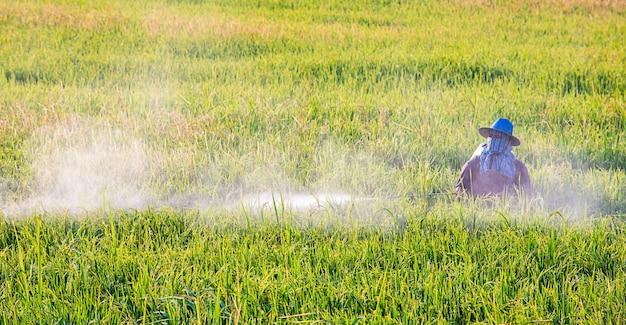 Os agricultores estão pulverizando as culturas em um campo verde. Foto Premium