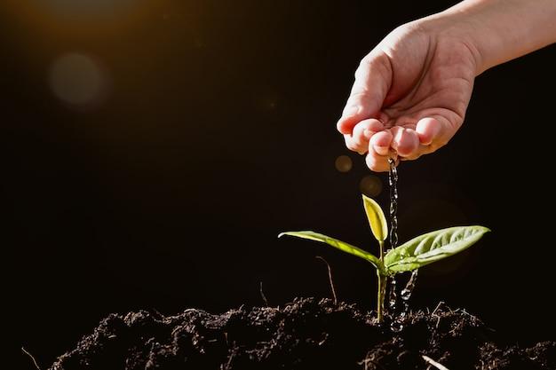 Os agricultores estão regando mudas em fundo preto Foto Premium