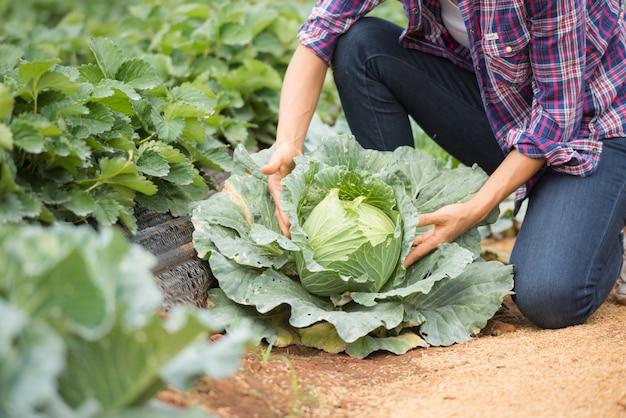 Os agricultores estão trabalhando na fazenda de repolho Foto gratuita