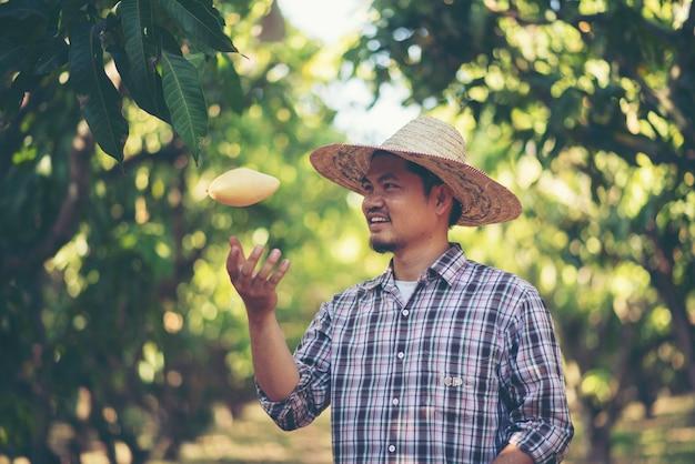 Os agricultores estão verificando a qualidade da manga, conceito jovem inteligente famers Foto Premium