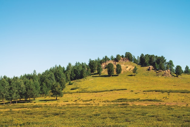Os cedros crescem na colina perto da pedra rochosa em dia ensolarado. árvores coníferas surpreendentes sob o céu azul. rica vegetação das terras altas. paisagem de montanha inimaginável. Foto Premium