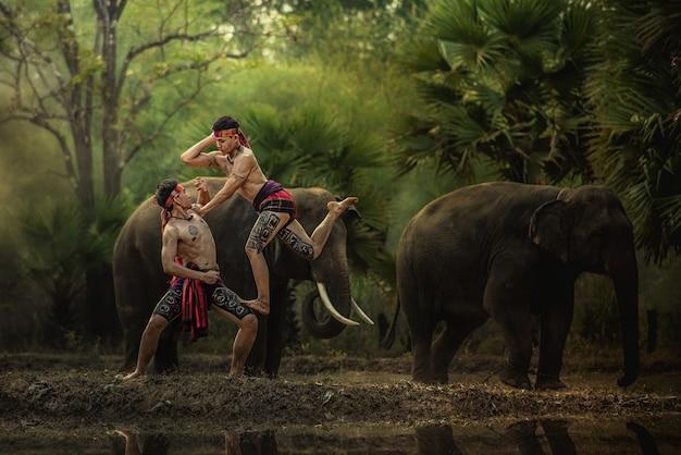 Os elefantes na floresta e o mahout do encaixotamento com estilo de vida do elefante do mahout em chang village, província de surin tailândia. Foto Premium