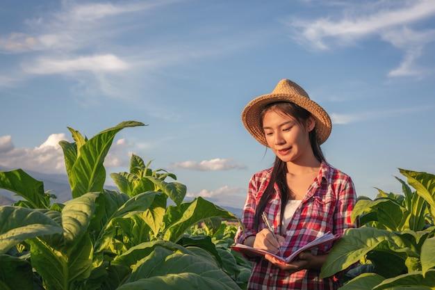 Os fazendeiros prendem o caderno verificam campos de tabaco modernos. Foto gratuita