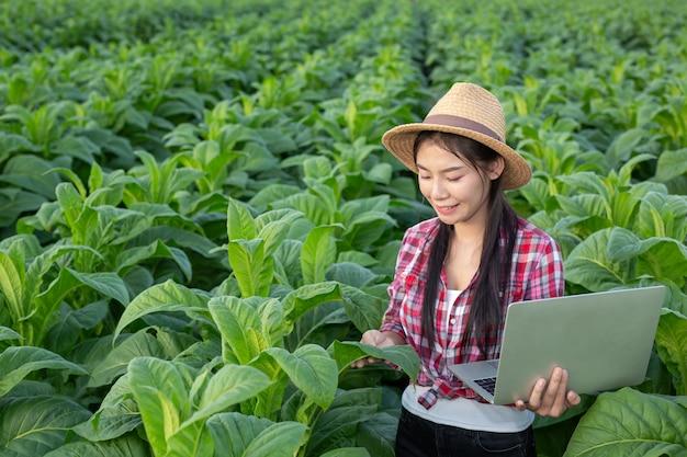 Os fazendeiros prendem tabuletas verificam campos de tabaco modernos. Foto gratuita