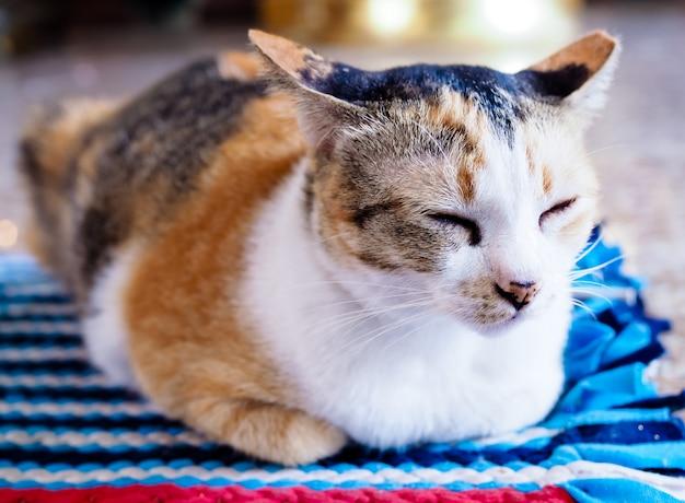 Os gatos de brown dormem em tapetes coloridos. Foto Premium