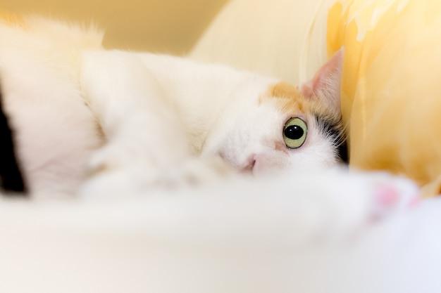 Os gatos olham para a câmera pelo pânico. Foto Premium
