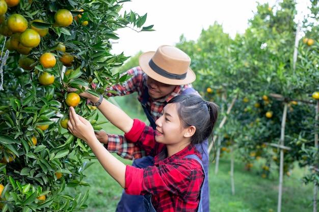 Os jovens agricultores estão coletando laranja Foto gratuita