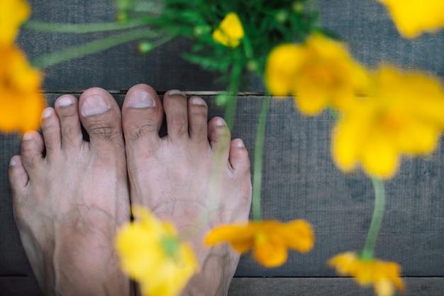 Os pés humanos em pé no chão de madeira fecham a flor amarela do cosmos Foto Premium