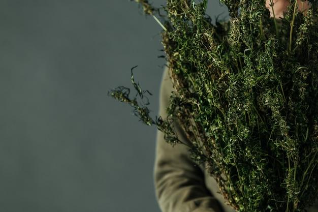 Os plantadores guardam árvores do cannabis em um fundo cinzento. Foto gratuita