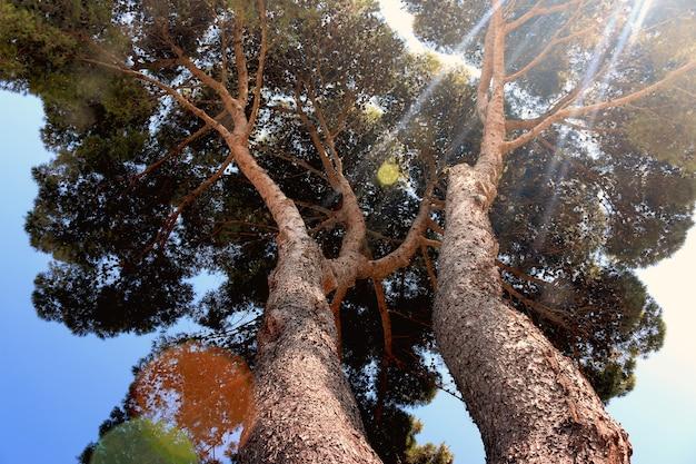 Os raios do sol atravessam uma grande vista da árvore de baixo Foto gratuita