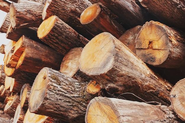 Os troncos de carvalho são empilhados em uma pilha, em ângulo, em seção transversal e comprimento. exploração madeireira Foto Premium