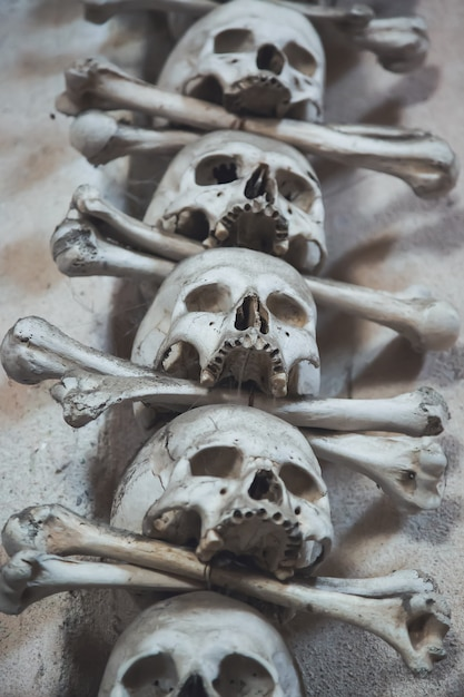 Ossos e caveiras humanas Foto Premium