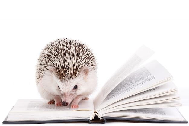 Ouriço africano em branco e livro Foto Premium