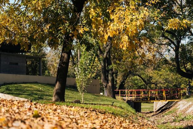 Outono bonito na paisagem do parque Foto gratuita