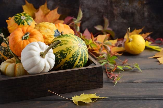 Outono composição de ação de graças com sortidas mini abóboras na bandeja de madeira em uma mesa de madeira Foto Premium