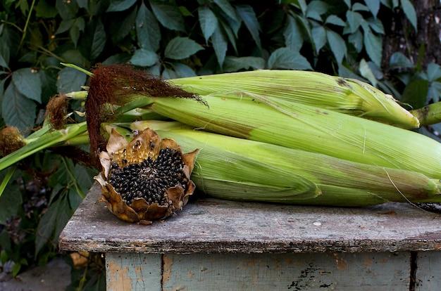 Outono de jardim de milho girassol Foto Premium