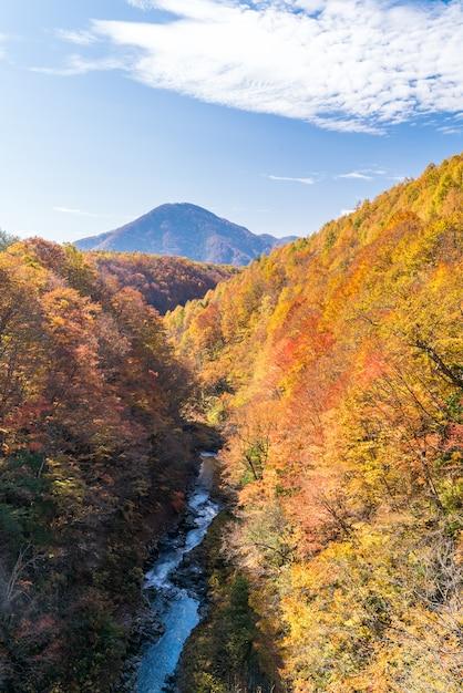 Outono de nakatsugawa fukushima Foto Premium