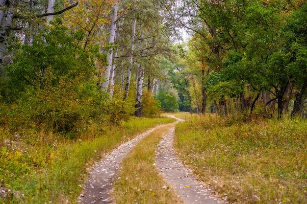 Outono floresta selvagem. caminho bem trilhado, folhas amarelas caídas e grama amarelada Foto Premium