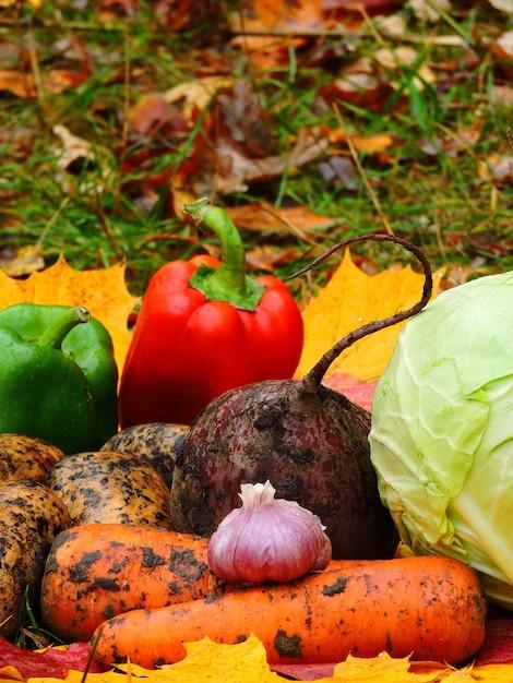 Outono legumes em folhas de outono Foto Premium