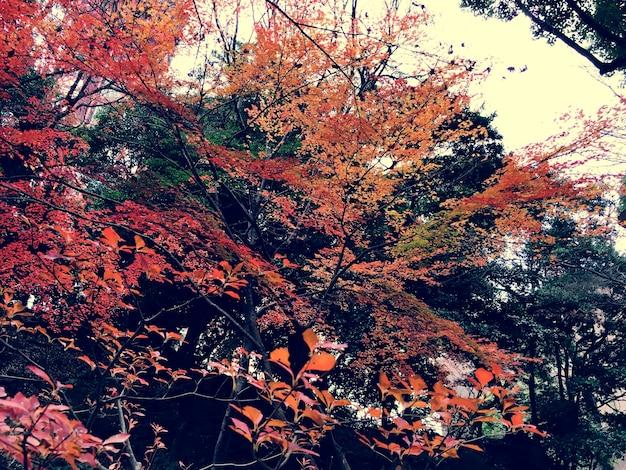 Outono vermelho folhas natureza paisagem Foto gratuita
