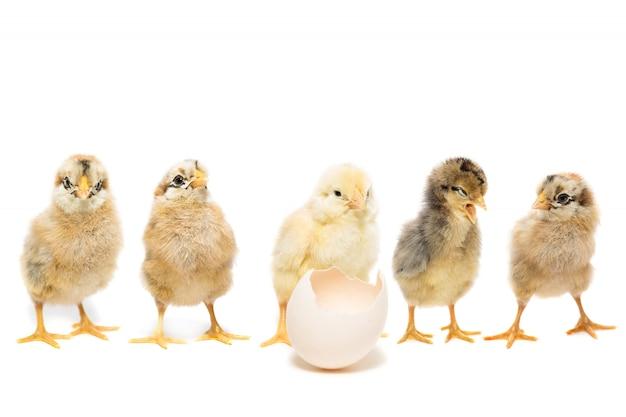 Ovo de galinha em branco Foto Premium