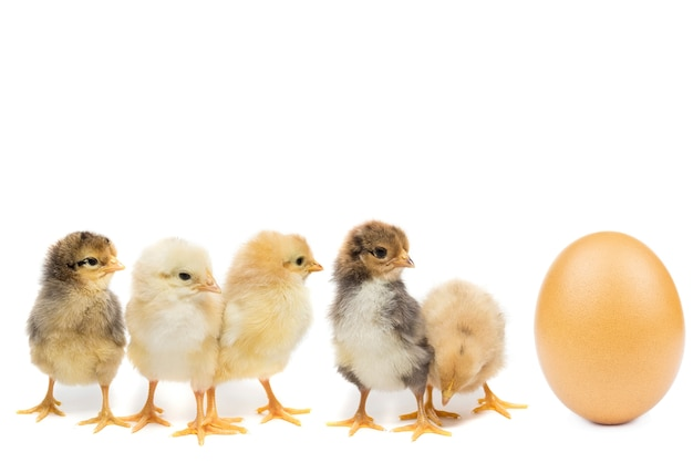 Ovo de galinha no fundo branco Foto Premium