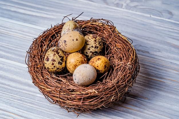 Ovos de codorna em um ninho. ovos dos pássaros no ninho em de madeira rústico. Foto Premium