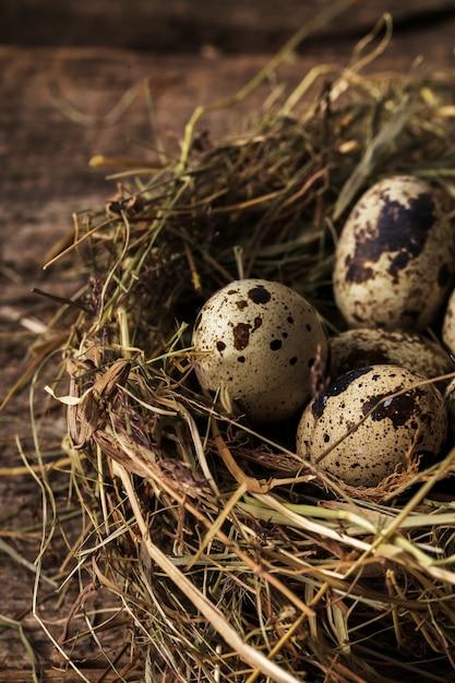 Ovos de codorna em um ninho Foto gratuita