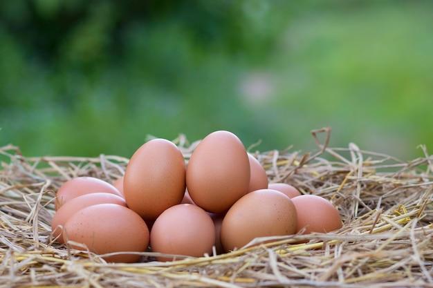 Ovos de galinha de boa qualidade no ninho de palha em fundo verde borrado, com proteína e valor nutricional em fazenda local na tailândia. Foto Premium