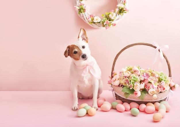 Ovos de páscoa e flores. cesta de páscoa e cachorro com flores e ovos em fundo rosa Foto Premium