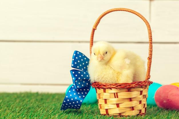 Ovos de páscoa e galinhas na grama verde Foto Premium