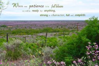 Paciência em plena floração Foto gratuita