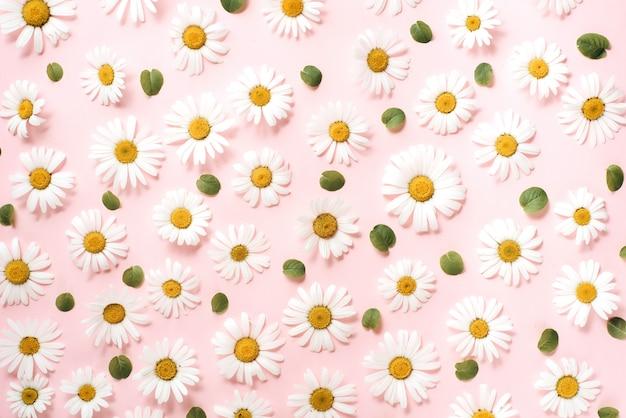 Padrão de camomila, pétalas, folhas em rosa Foto Premium