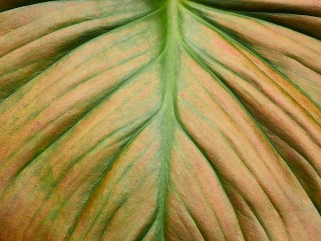 Padrão de folha verde Foto Premium