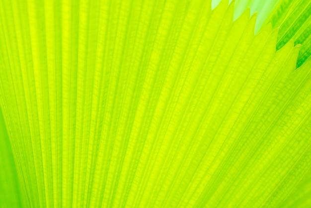 Padrão de linhas retas de folhas verdes frescas Foto Premium
