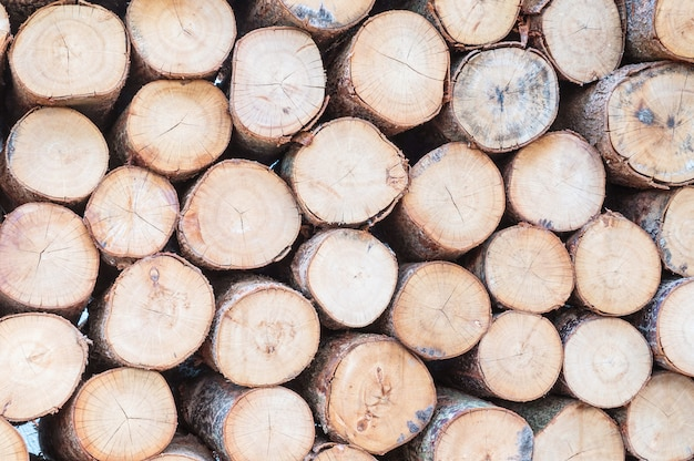 Padrão de madeira closeup na pilha de madeira velha madeira texturizada fundo Foto Premium