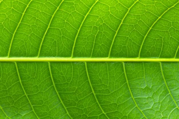 Padrão na folha verde Foto Premium