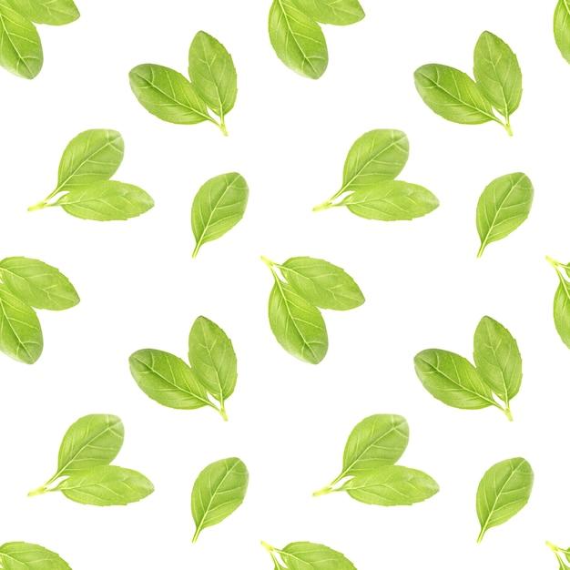 Padrão sem emenda de folhas de manjericão Foto Premium