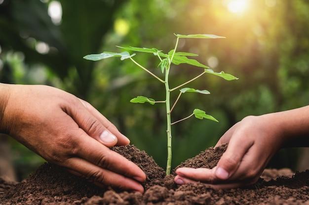 Pai crianças, ajudando, plantar, árvore jovem, em, jardim Foto Premium