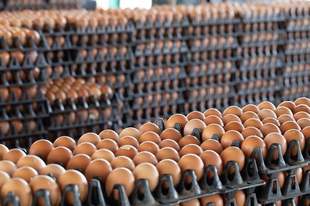 Painéis de ovos dispostos em uma fazenda de galinha com um fundo de ovo turva, ocupação de agricultores na tailândia Foto Premium
