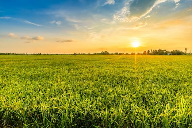 Paisagem ambiente bonito de campo verde | Foto Premium
