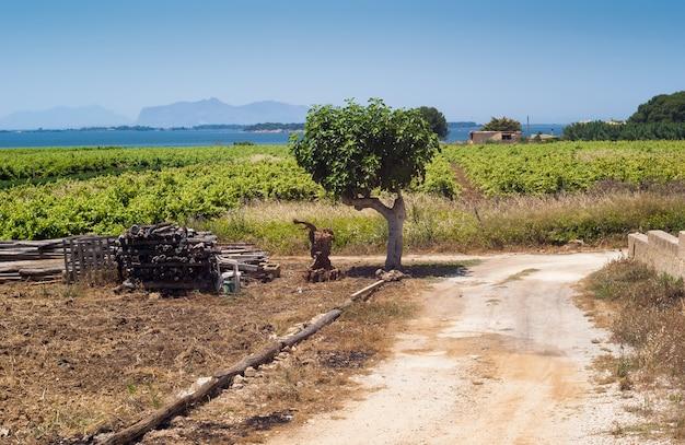Paisagem bonita campo siciliano Foto Premium