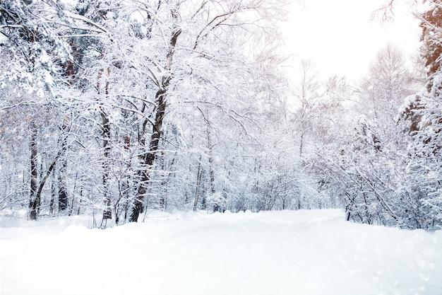 Paisagem bonita do inverno com árvores cobertos de neve. feliz ano novo. feliz natal Foto Premium