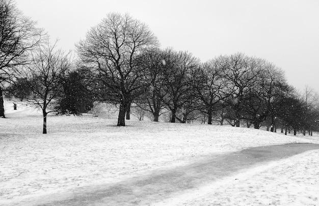 Paisagem com neve em preto e branco Foto gratuita