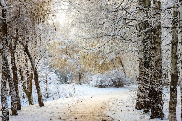 Paisagem da floresta de inverno. árvores sob uma espessa camada de neve. rússia, moscou, sokolniki, parque Foto Premium