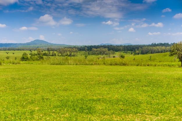 Paisagem da floresta de savana e montanha com um céu azul e nuvens brancas na primavera Foto Premium