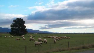 Paisagem da nova zelândia no inverno, nz Foto gratuita